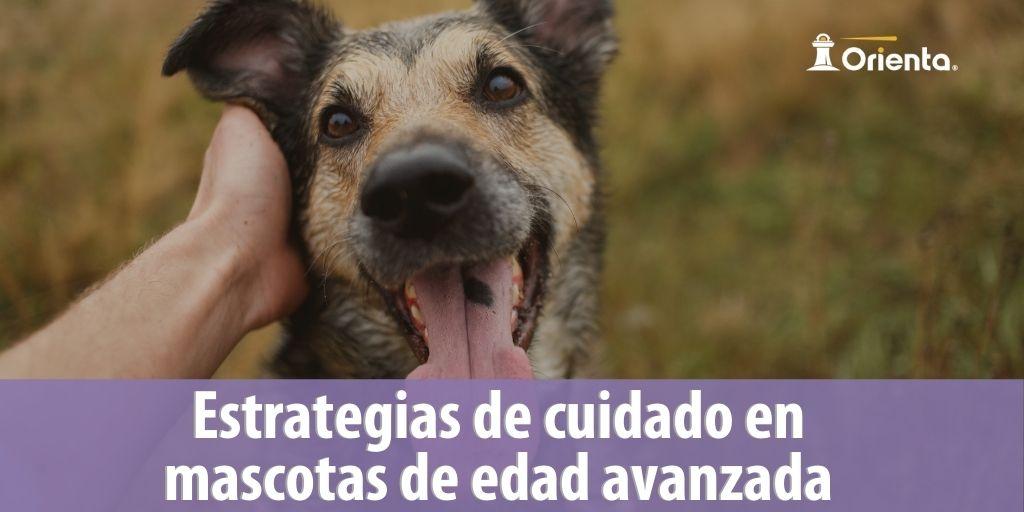 Estrategias de cuidado en mascotas de edad avanzada
