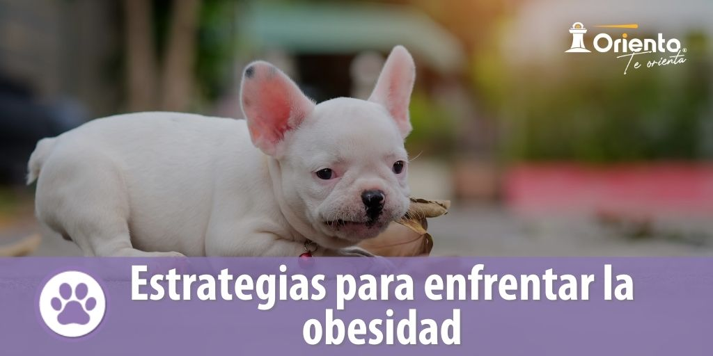 Estrategias para enfrentar la obesidad