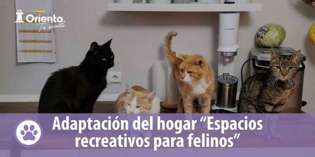 """Adaptación del hogar """"Espacios recreativos para felinos"""""""